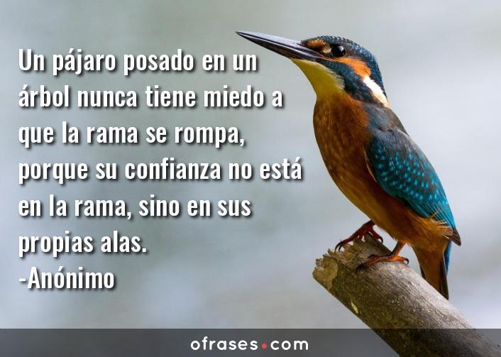 Anónimo Un pájaro posado en un árbol nunca tiene miedo a que la rama se rompa, porque su confianza no está en la rama, sino en sus propias alas.