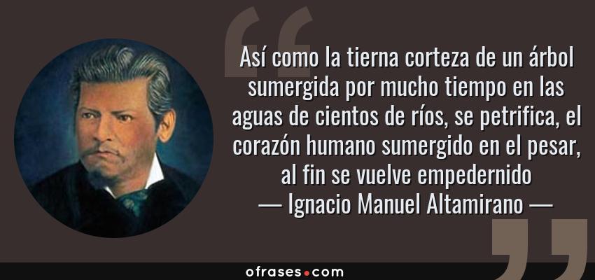Frases de Ignacio Manuel Altamirano - Así como la tierna corteza de un árbol sumergida por mucho tiempo en las aguas de cientos de ríos, se petrifica, el corazón humano sumergido en el pesar, al fin se vuelve empedernido
