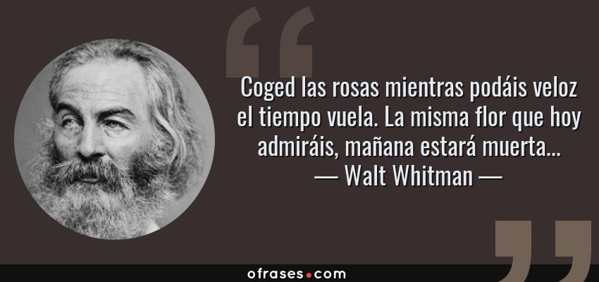 Frases de Walt Whitman - Coged las rosas mientras podáis veloz el tiempo vuela. La misma flor que hoy admiráis, mañana estará muerta...