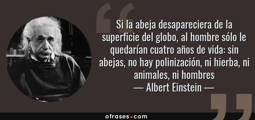 Frases de Albert Einstein - Si la abeja desapareciera de la superficie del globo, al hombre sólo le quedarían cuatro años de vida: sin abejas, no hay polinización, ni hierba, ni animales, ni hombres