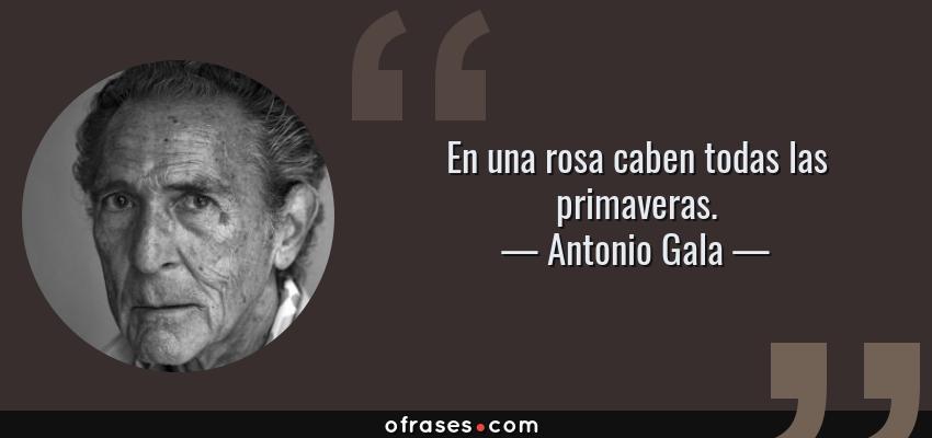Frases de Antonio Gala - En una rosa caben todas las primaveras.