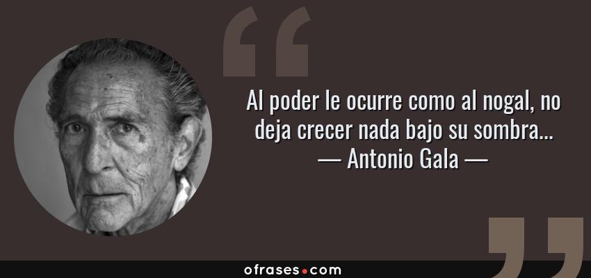 Frases de Antonio Gala - Al poder le ocurre como al nogal, no deja crecer nada bajo su sombra...
