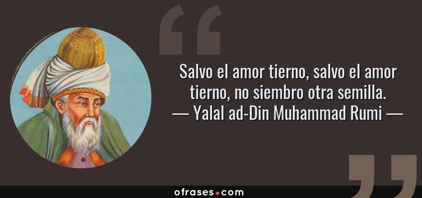 Frases de Yalal ad-Din Muhammad Rumi - Salvo el amor tierno, salvo el amor tierno, no siembro otra semilla.
