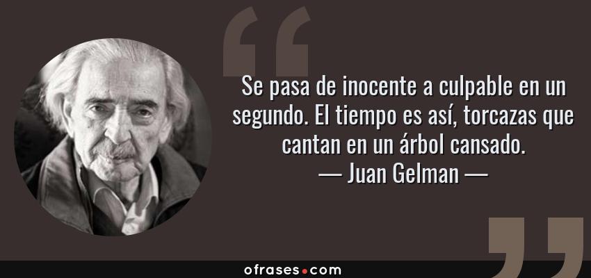 Frases de Juan Gelman - Se pasa de inocente a culpable en un segundo. El tiempo es así, torcazas que cantan en un árbol cansado.