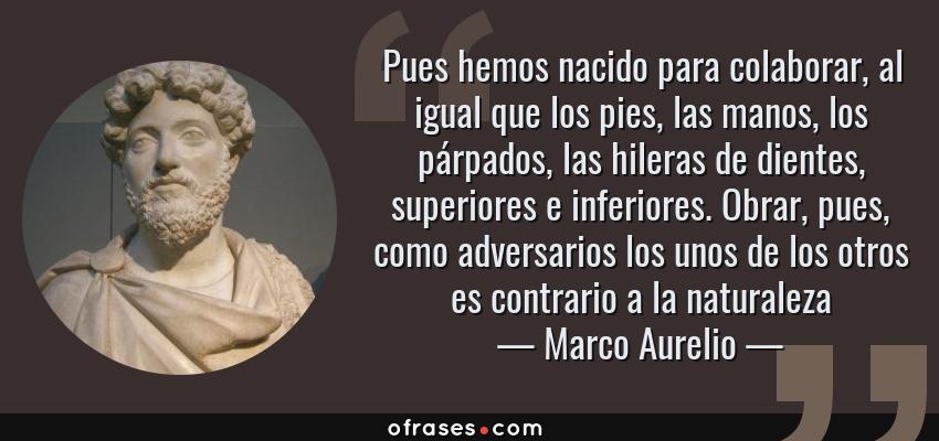 Frases de Marco Aurelio - Pues hemos nacido para colaborar, al igual que los pies, las manos, los párpados, las hileras de dientes, superiores e inferiores. Obrar, pues, como adversarios los unos de los otros es contrario a la naturaleza