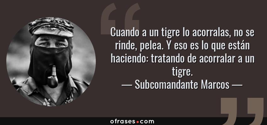Frases de Subcomandante Marcos - Cuando a un tigre lo acorralas, no se rinde, pelea. Y eso es lo que están haciendo: tratando de acorralar a un tigre.