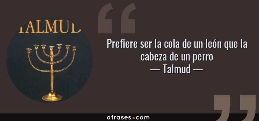Frases de Talmud - Prefiere ser la cola de un león que la cabeza de un perro