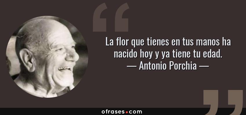 Frases de Antonio Porchia - La flor que tienes en tus manos ha nacido hoy y ya tiene tu edad.
