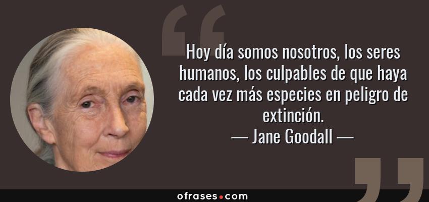 Frases de Jane Goodall - Hoy día somos nosotros, los seres humanos, los culpables de que haya cada vez más especies en peligro de extinción.