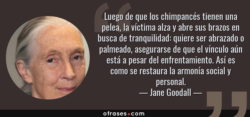 Frases de Jane Goodall - Luego de que los chimpancés tienen una pelea, la víctima alza y abre sus brazos en busca de tranquilidad: quiere ser abrazado o palmeado, asegurarse de que el vínculo aún está a pesar del enfrentamiento. Así es como se restaura la armonía social y personal.