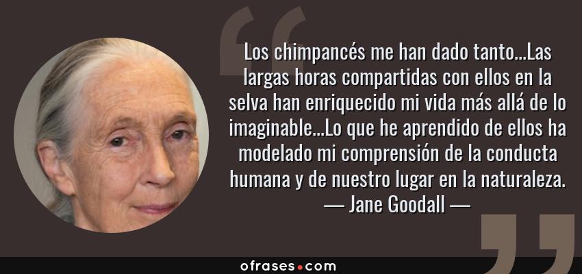 Frases de Jane Goodall - Los chimpancés me han dado tanto...Las largas horas compartidas con ellos en la selva han enriquecido mi vida más allá de lo imaginable...Lo que he aprendido de ellos ha modelado mi comprensión de la conducta humana y de nuestro lugar en la naturaleza.
