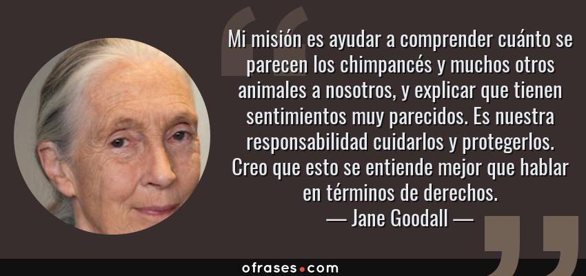 Frases de Jane Goodall - Mi misión es ayudar a comprender cuánto se parecen los chimpancés y muchos otros animales a nosotros, y explicar que tienen sentimientos muy parecidos. Es nuestra responsabilidad cuidarlos y protegerlos. Creo que esto se entiende mejor que hablar en términos de derechos.