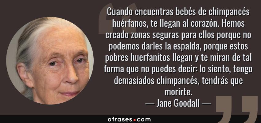 Frases de Jane Goodall - Cuando encuentras bebés de chimpancés huérfanos, te llegan al corazón. Hemos creado zonas seguras para ellos porque no podemos darles la espalda, porque estos pobres huerfanitos llegan y te miran de tal forma que no puedes decir: lo siento, tengo demasiados chimpancés, tendrás que morirte.