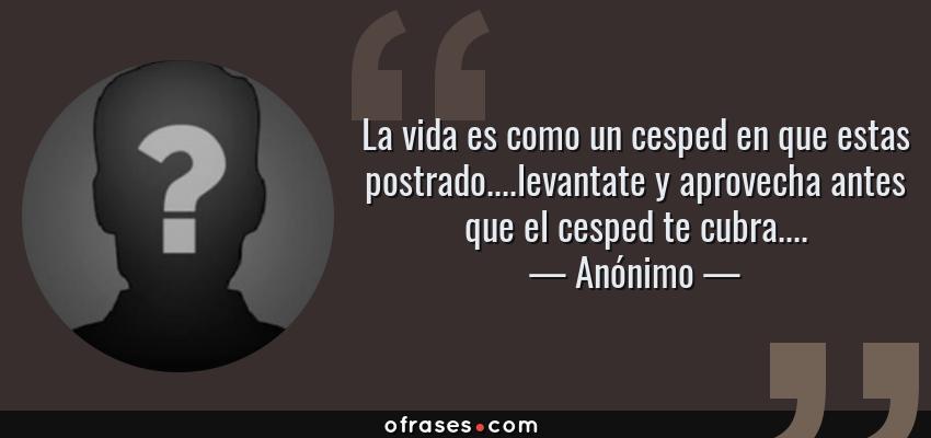 Frases de Anónimo - La vida es como un cesped en que estas postrado....levantate y aprovecha antes que el cesped te cubra....