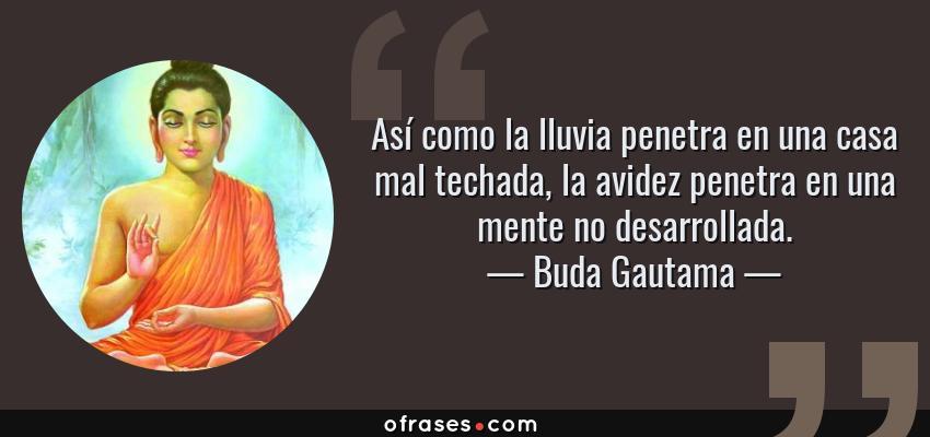 Frases de Buda Gautama - Así como la lluvia penetra en una casa mal techada, la avidez penetra en una mente no desarrollada.