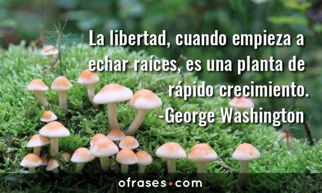 George Washington La libertad, cuando empieza a echar raíces, es una planta de rápido crecimiento.